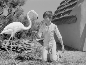 White Mane 1953 6